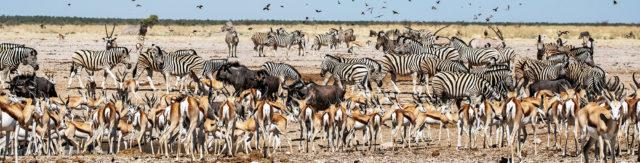 Namibia Botswana Zimbabwe Przygody4x4